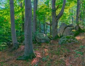 """Поставяне под закрила на общински вековни гори чрез определянето им със статут """"гори във фаза на старост"""" в землището на с. Дождевица, с.Жиленци и с.Гюешево, общ.Кюстендил"""